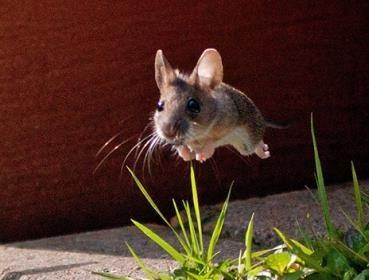 А что, мыши уже летают?