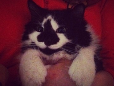 Самый счастливый кот в мире