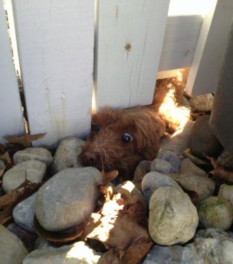Собачка постаралась протиснуться под забором
