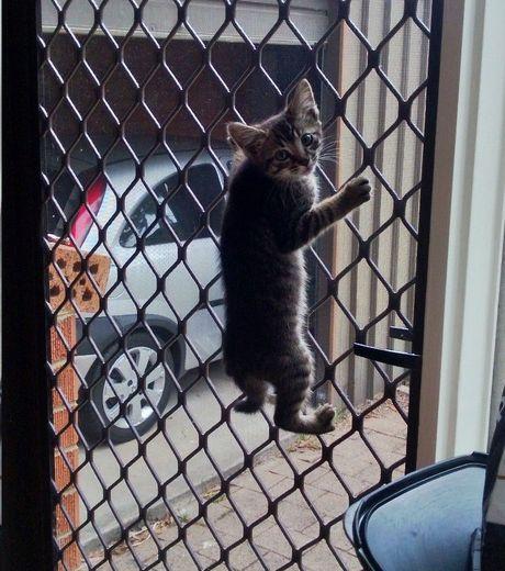 Кошки все-таки ловчее собак