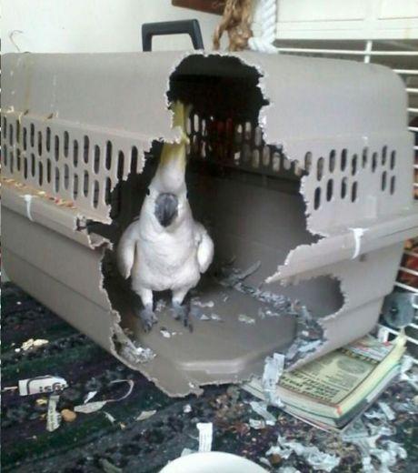 Свободу попугаям!!!