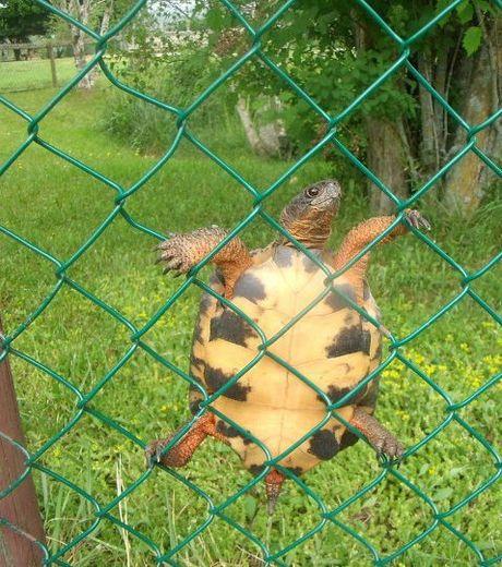 И снова чудеса ловкости от черепахи