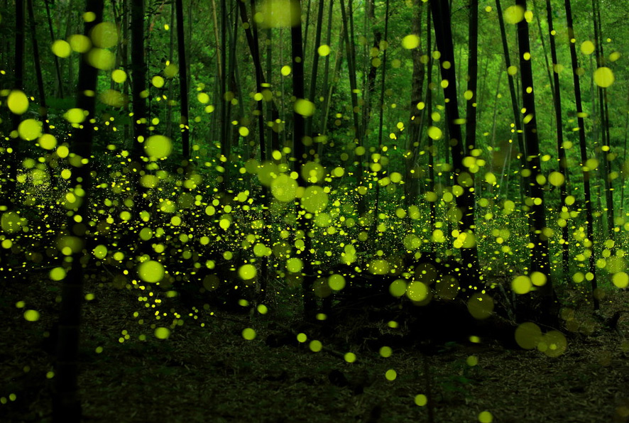 Волшебный лес Yume Cyan