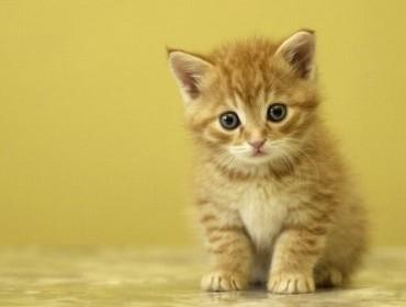 Во Франции открывается первый кошачий бар