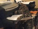 Видео сражающейся с принтером кошки позабавило интернет