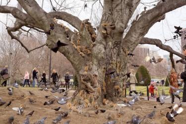 На этом дереве собрались все белки города