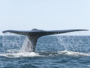 Как серфингист с китом встречался