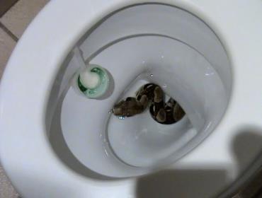 Змея укусила мужчину в туалете