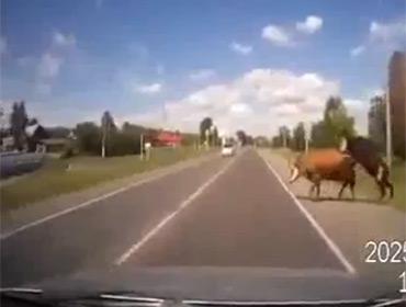 Животные страсти