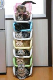 Организуйте место для каждой кошечки и каждая кошечка будет на своем месте