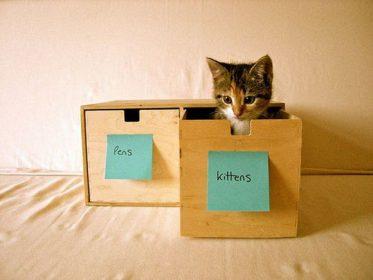 Подпишите котенка