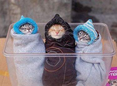 Спеленайте котиков