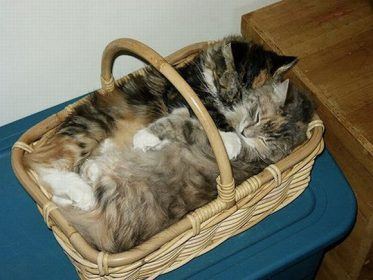 Кошки в лукошке