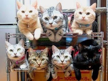 Экстренное хранение кошек