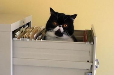 Правильное размещение офисного котика