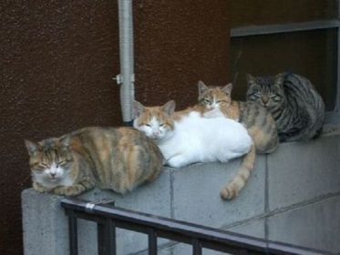 Хорошо просушите кошку перед хранением
