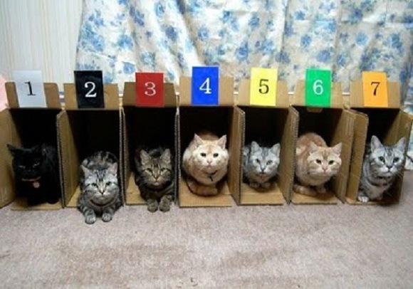 Сортируем котиков правильно
