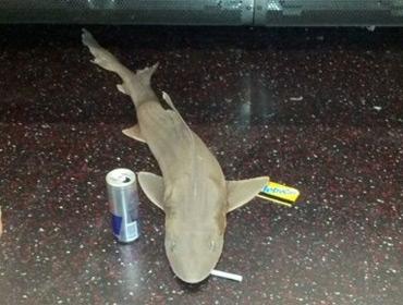 Акула в метро Нью-Йорка