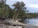 Река ест деревья