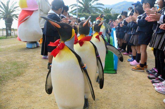 Парад пингвинов в бабочках