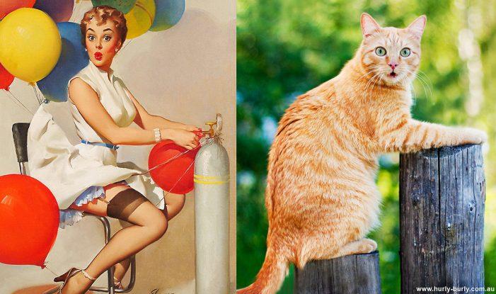 Смешные фото кошек в образе пин-ап гёрлз