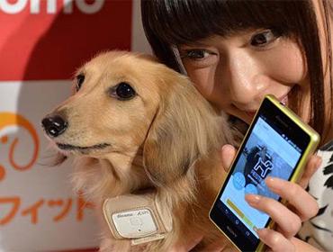 Мобильный сервис для мониторинга здоровья собак
