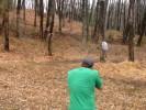 Месть дерева