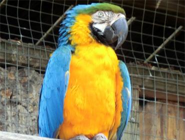 Попугай наводит следователей на след убийцы