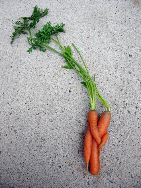 Эмоциональные морковки