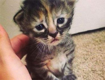 Муррманентно грустный кот