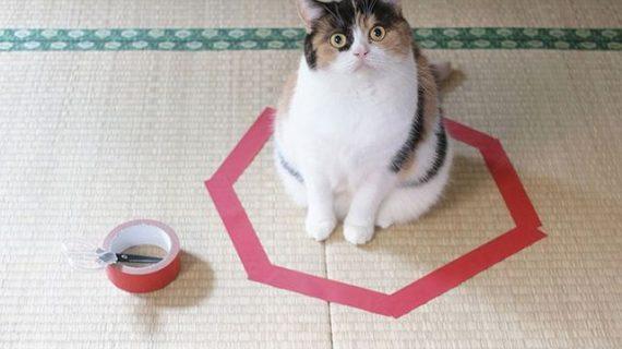 Кошкин круг