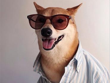 Пёс-модель зарабатывает 10000 евро в месяц