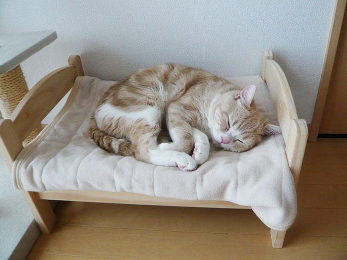 Японцы переделывают кукольные кроватки в уютные постельки для кисок