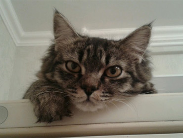"""""""Алло, полиция? На меня кот странно смотрит!"""""""