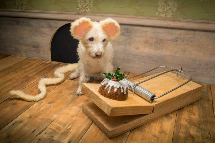 На Рождество фотограф наряжает собак разными животными