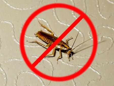 Месть убитого таракана