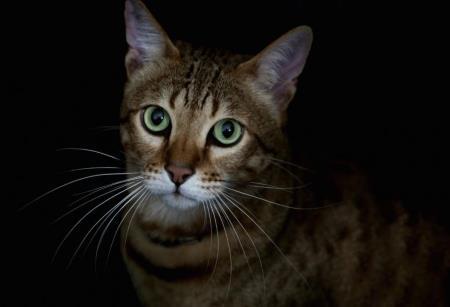 Кошка спасла семью от пожара