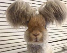 Кролик Уолли с ангельскими ушками