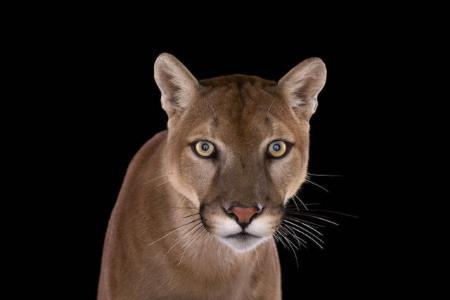 Портреты экзотических животных