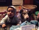Собака сказала «мама»