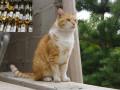 Белое вино спасло запертого в подвале кота