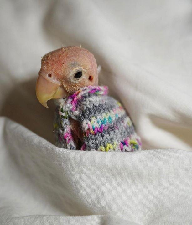 Свитер для попугая