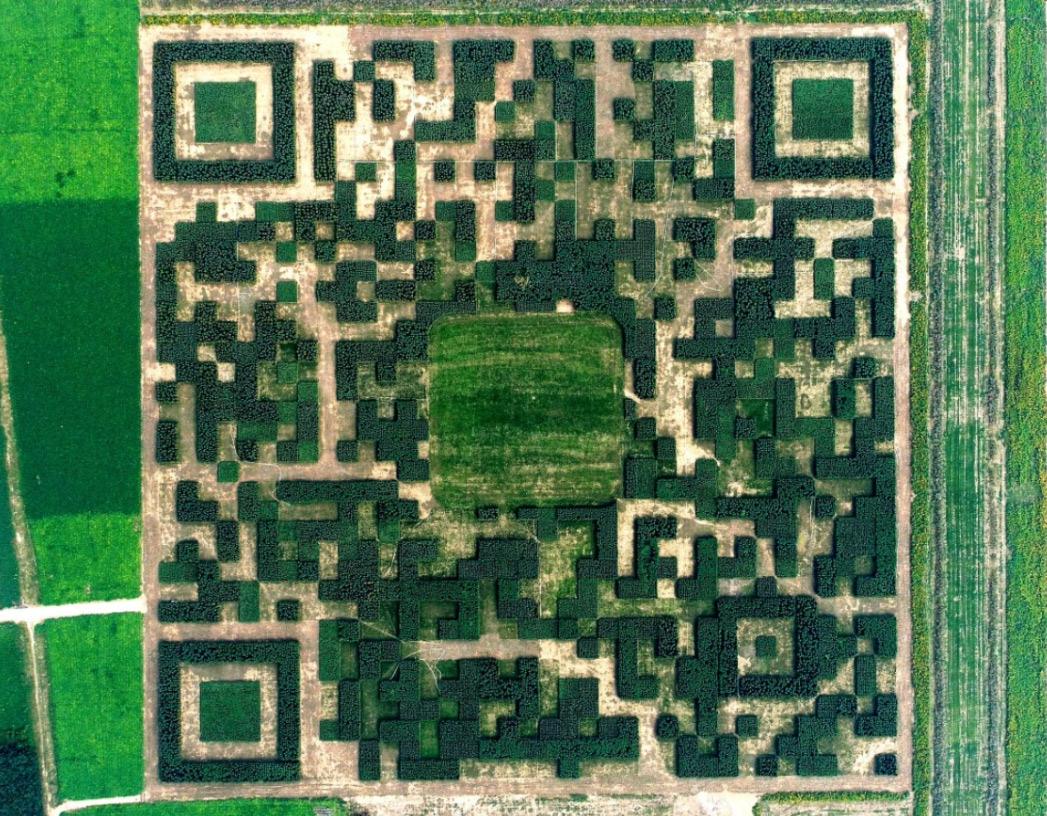 Гигантский QR-код из 130000 кустарников