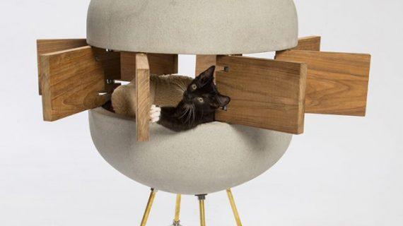 Когда архитекторы придумывают дома для кошек