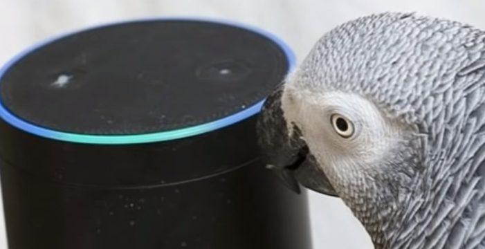 Умный попугай покупает через умную колонку