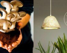 Абажуры из грибов
